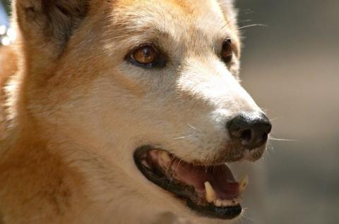 По собачьим законам. Как не стать жертвой четвероногих