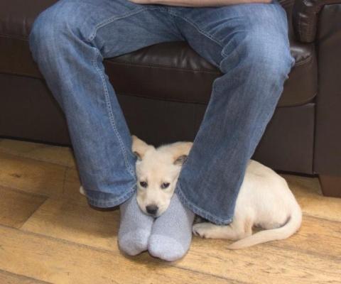 Вот почему собаки любят сидеть в ногах.