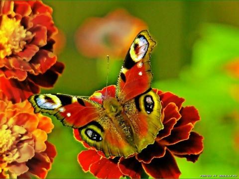 Одни из самых прекрасных созданий на Земле...