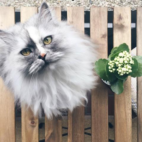 Очень красивая кошка, у кото…