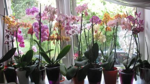 Орхидея длительный период не…