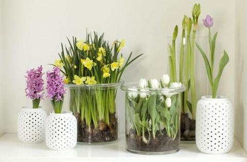 19 цветов и овощей, которые можно вырастить в вазе с водой