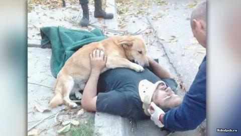 Собака поддерживала упавшего…
