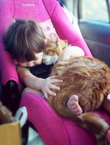 Да, порой коты бывают невыно…