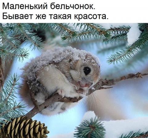 Рауф Мамедов