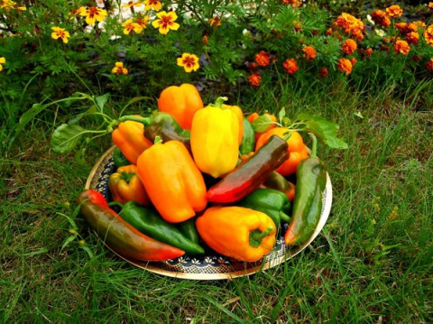 Перчик бывает разный — оранж…