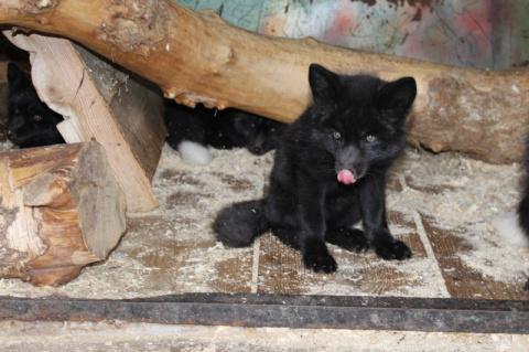 В Воронеже зоопарк опубликовал уникальные фото новорожденных детенышей животных