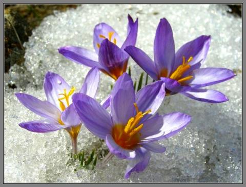 Весна в нашем доме!)