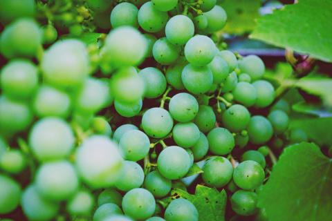 Зелен виноград