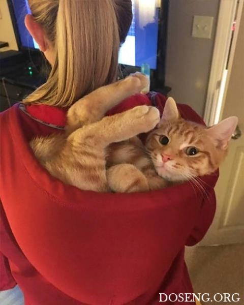 Главное, чтобы котам было удобно