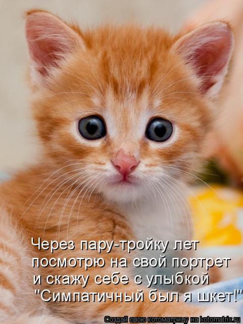 "РАЗВЕСЁЛАЯ ""ЗВЕРоКОТоМАТРИЦА!!!"""
