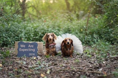 Свадебная фотосессия для бер…
