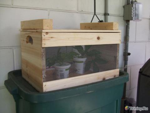 Разводим бабочек в домашних условиях