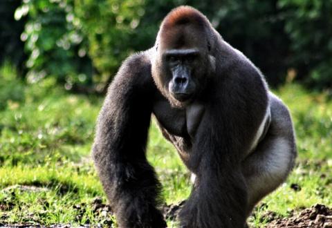 7 животных, способных захватить мир