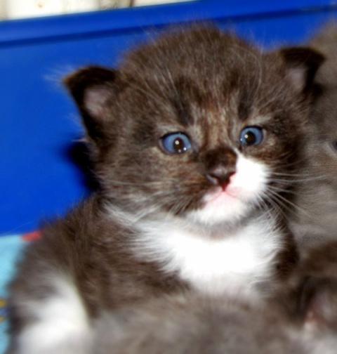 Парень взял домой кроху-котенка. Он и не подозревал в какого могучего красавца вымахает это чудо через год!