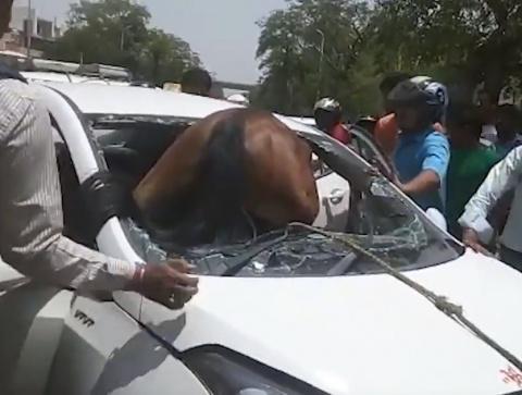 Лошадь влетела в лобовое стекло автомобиля