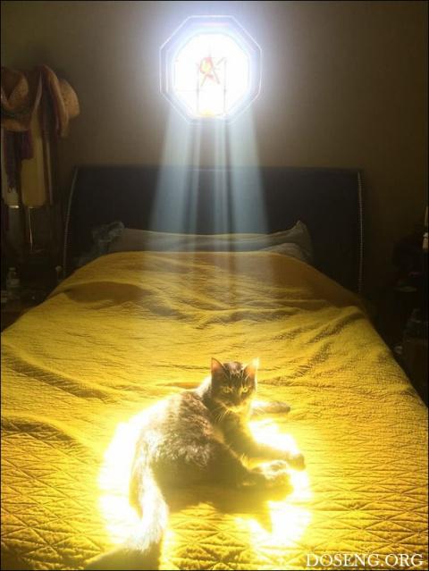 Коты и солнце! День чудесный