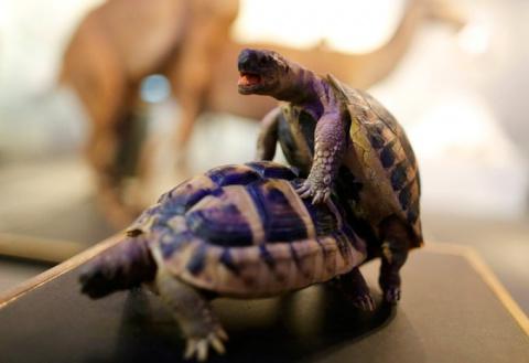 Пока других черепахи френдзо…