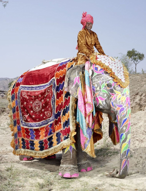 Слоновий боди-арт от индийск…