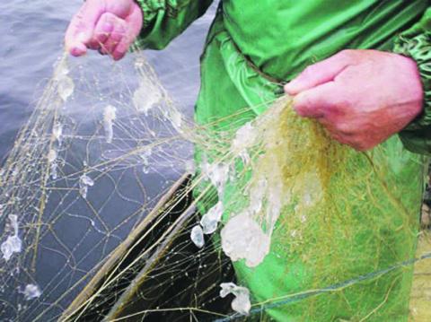 Днепр заселяют морские крабы и медузы