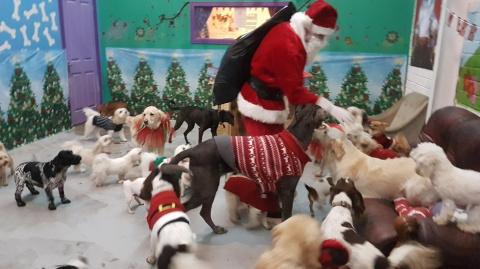Санта подарил подарки собака…
