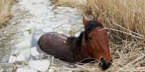 Полицейские спасли лошадь, оставленную умирать в болоте