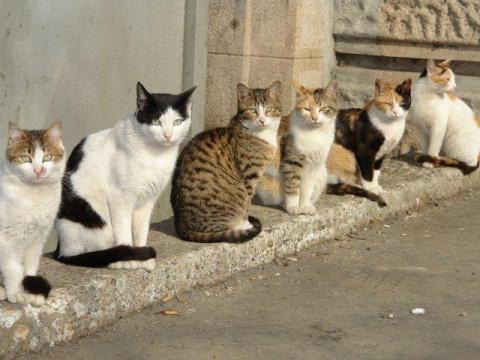 Реальная история: город, кот…