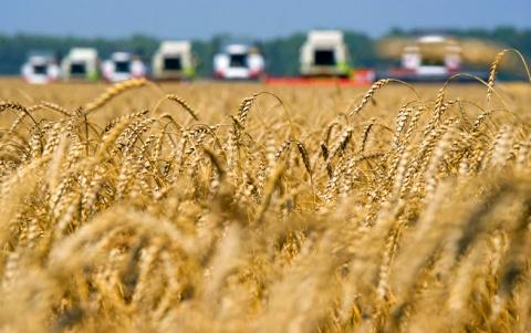 Экспорт зерна из России поби…