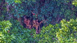 Редкие фотографии амазонског…