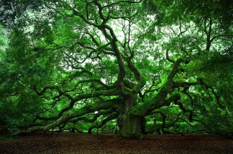 Дендротерапия – деревья-доноры