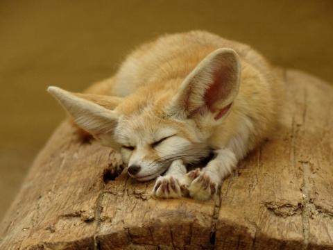 Самые красивые животные планеты (25 фото)