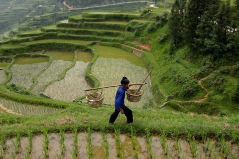 Как распознать поддельный рис