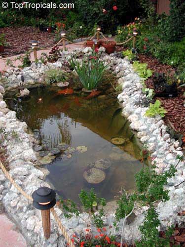 Строительство пруда на своем участке. Декоративный водоем