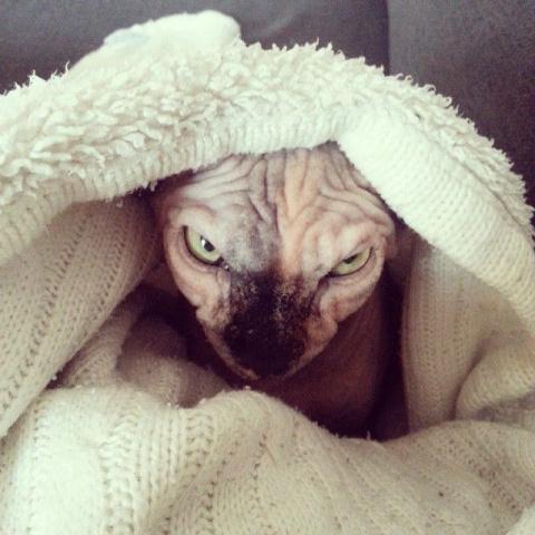 Адские коты, являющиеся исти…