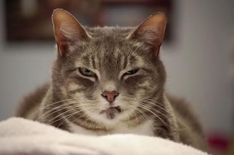 10+ самых сердитых кошек в м…
