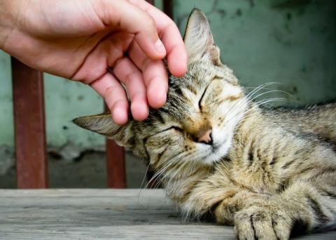 22 причины завести кошку, а не жену
