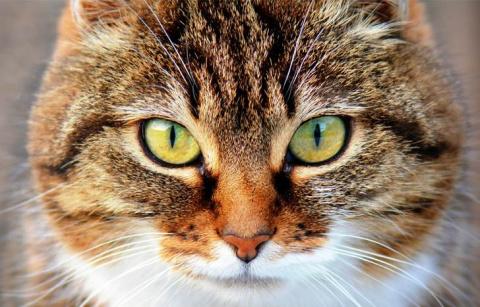 Кошки на самом деле лечат от…