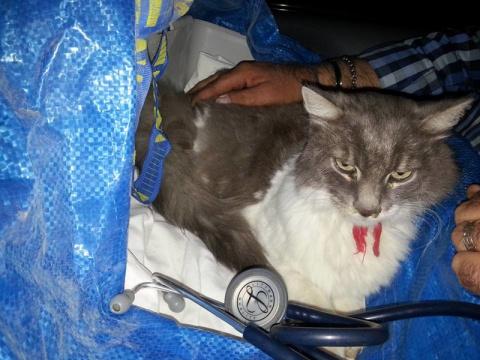 В Италии кот пролежал 33 дня…