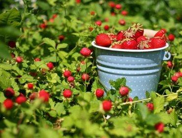 Правильный уход за садовой к…