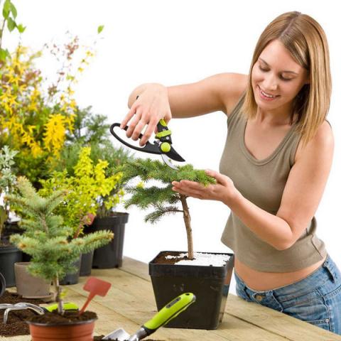 Инструкция: как развести зел…