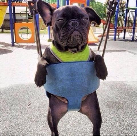 Смешные мысли собак, которым чуждо человеческое веселье