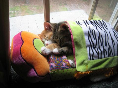 Котята заснули на ходу