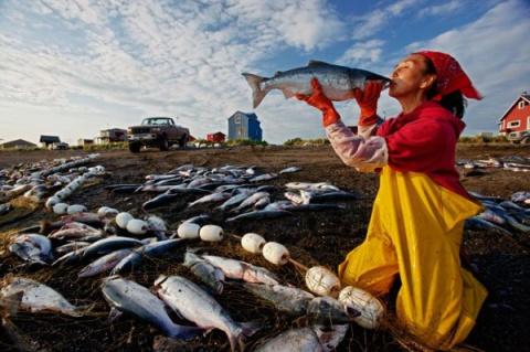 Выбор Аляски: лосось или золото