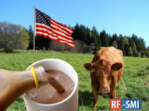 16 млн. американцев думают, что шоколадное молоко дают коричневые коровы