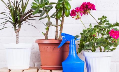 Объявите комнатным растениям банный день!