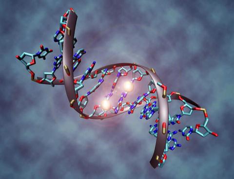 Молекула ДНК может исцелитьс…