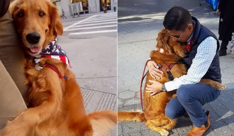 Собака-обнимака: самый любве…