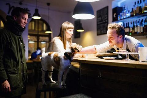 В какие кафе пускают с собак…