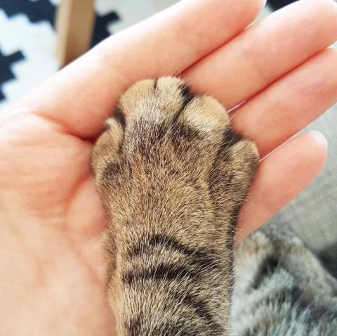 20 странных вещей, которые делают все владельцы котов