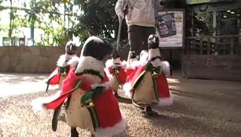 В Японии прошел рождественский марш пингвинов